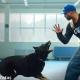 intervencao canina